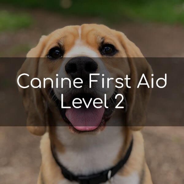 Canine First Aid Level 2